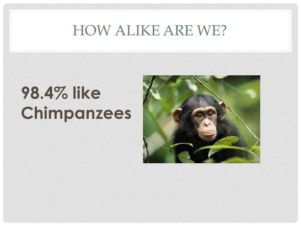 How alike are we 98.4% like Chimpanzees