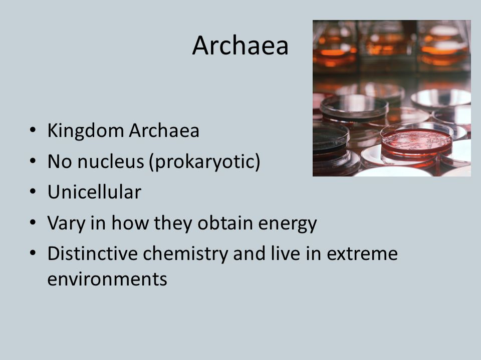 Archaea Kingdom Archaea No nucleus (prokaryotic) Unicellular