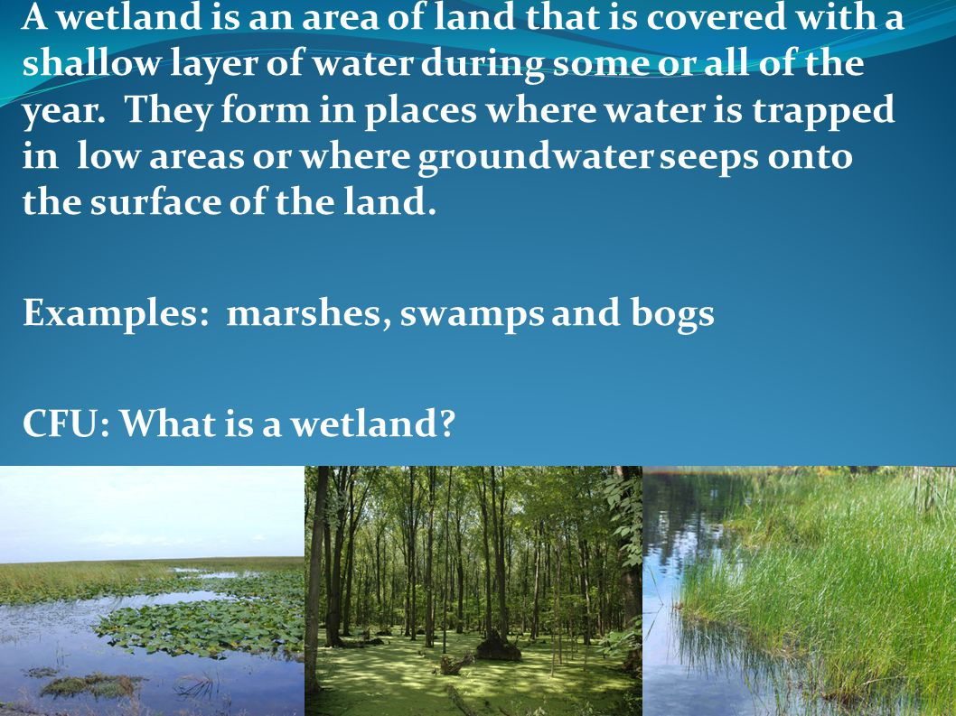A wetland is an area of land that is covered with a shallow layer of water during some or all of the year. They form in places where water is trapped in low areas or where groundwater seeps onto the surface of the land.