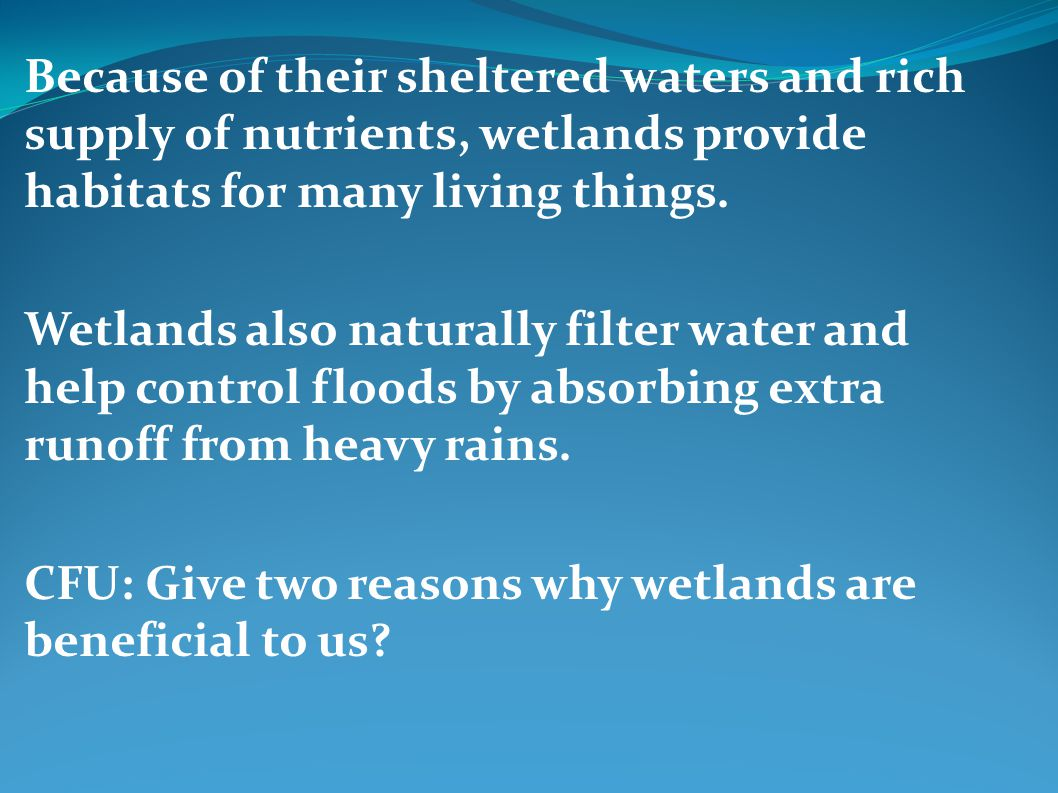 Because of their sheltered waters and rich supply of nutrients, wetlands provide habitats for many living things.