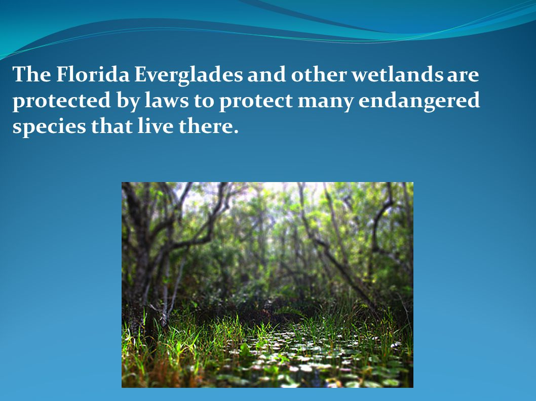 The Florida Everglades and other wetlands are protected by laws to protect many endangered species that live there.