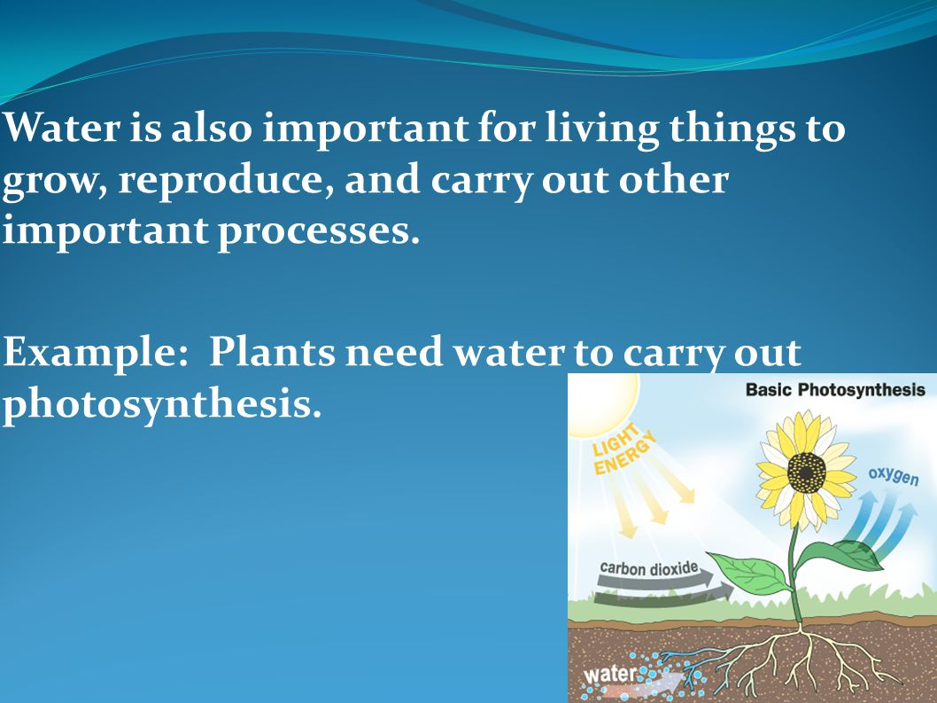 Water is also important for living things to grow, reproduce, and carry out other important processes.