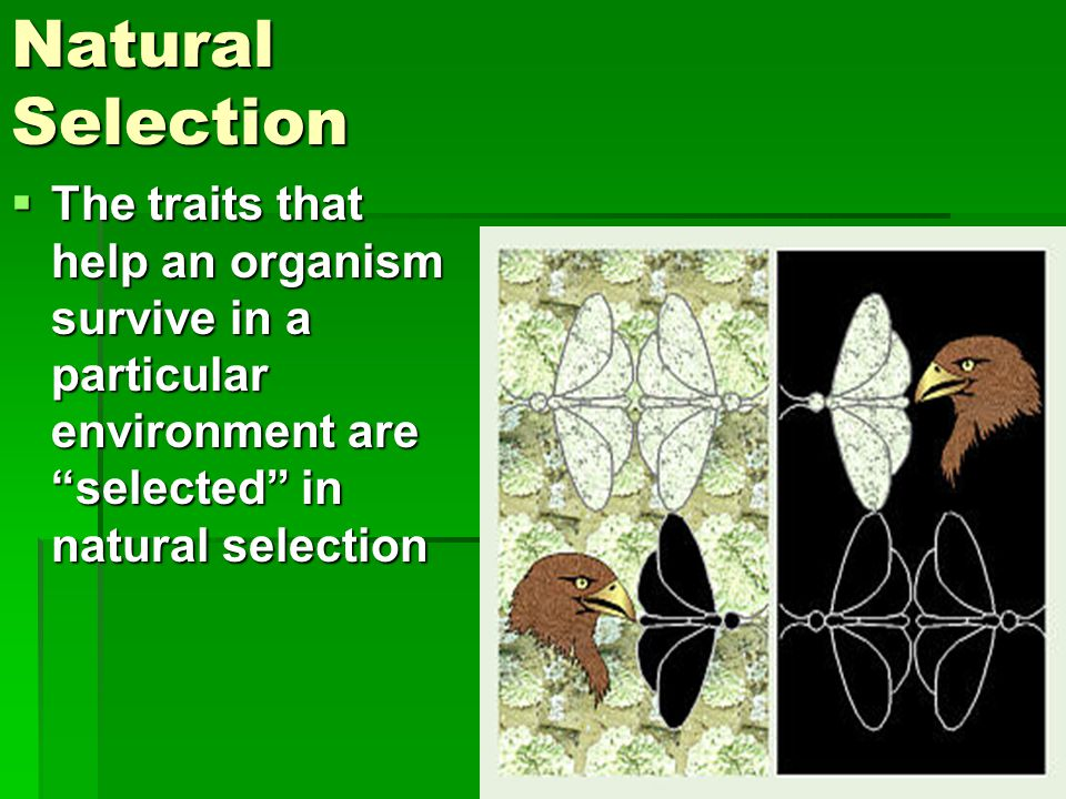 Natural Selection The traits that help an organism survive in a particular environment are selected in natural selection.