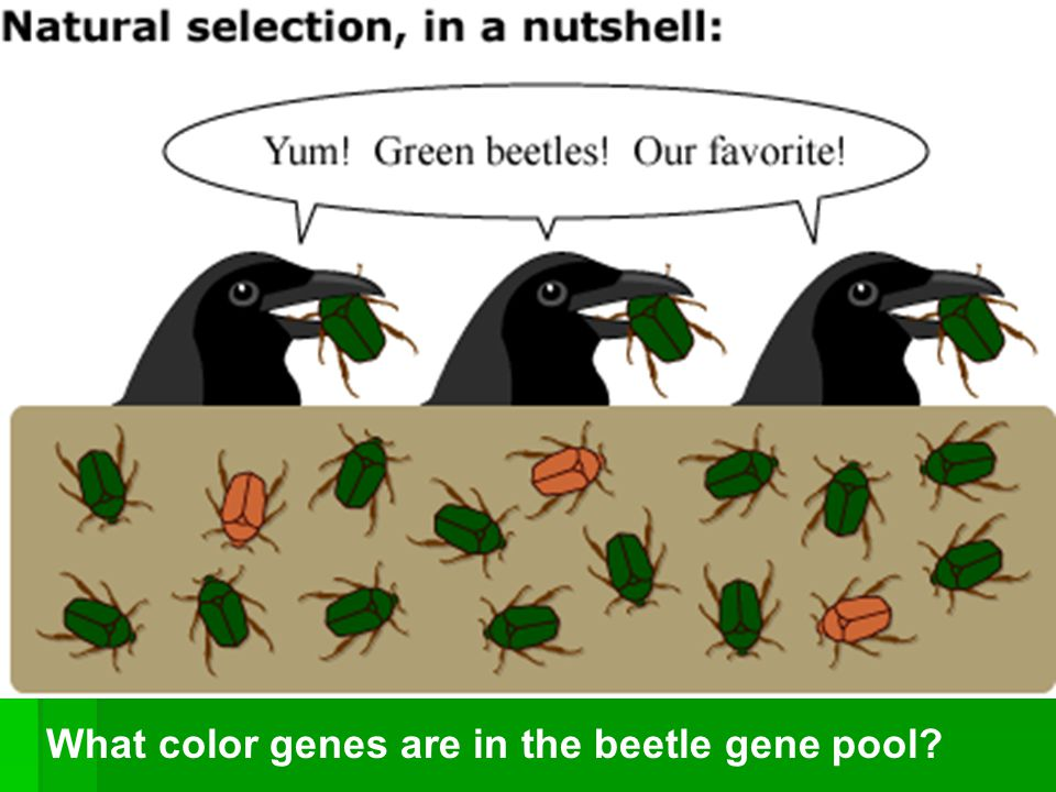 Are Genes Or Traits Selected For In Natural Selection