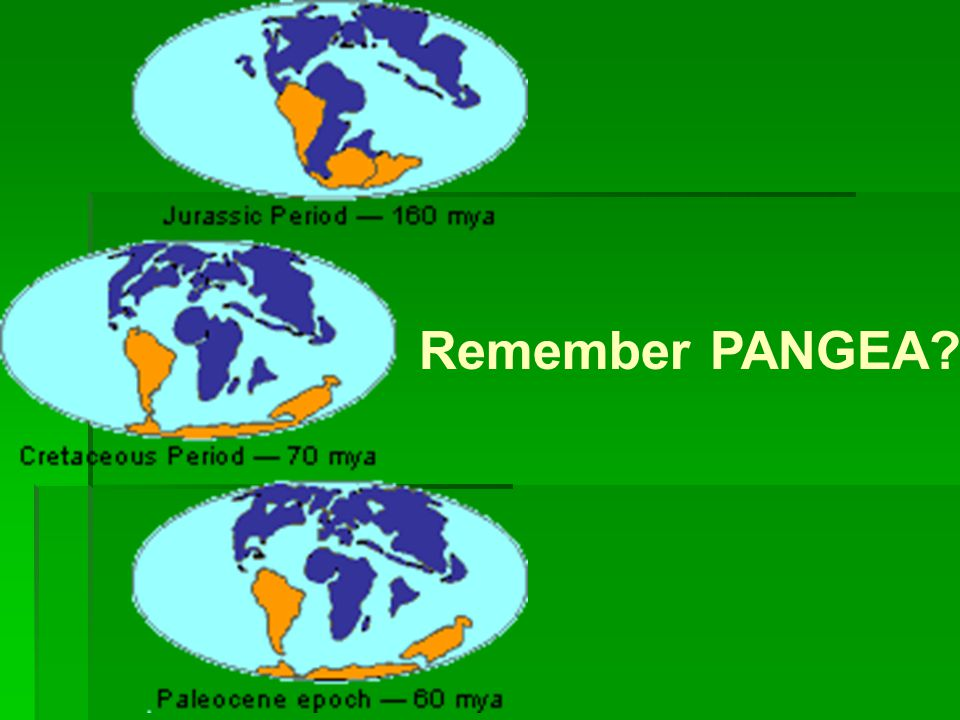 Remember PANGEA