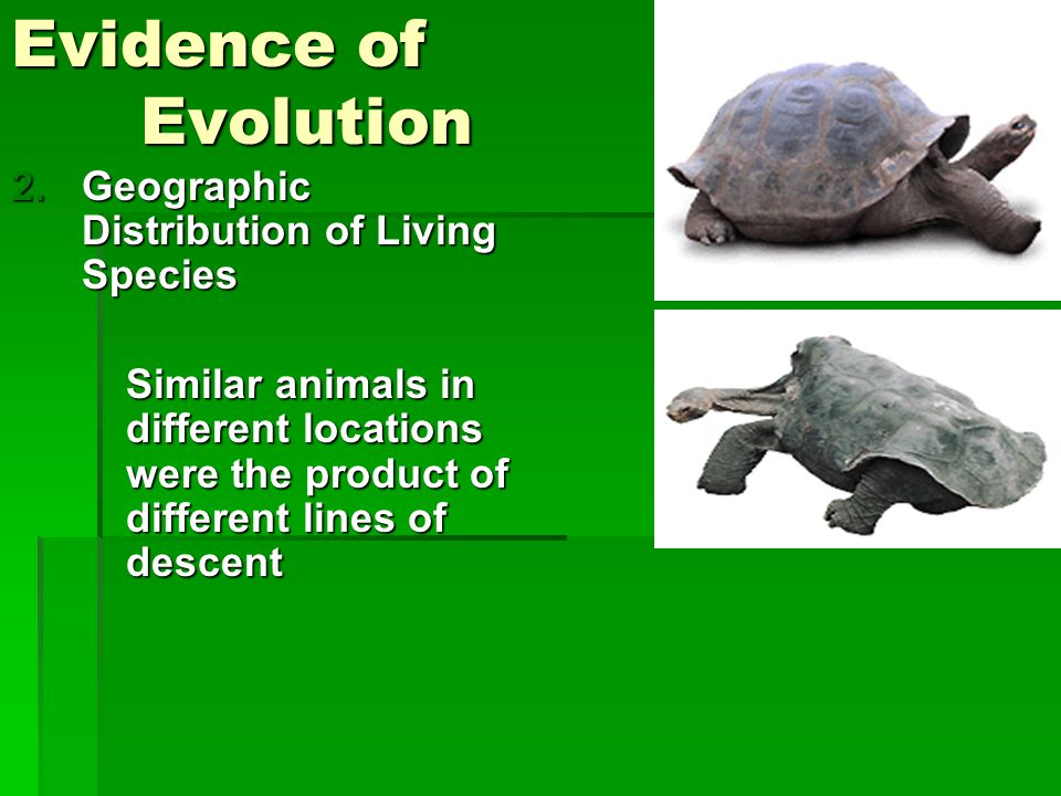 Evidence of Evolution Geographic Distribution of Living Species