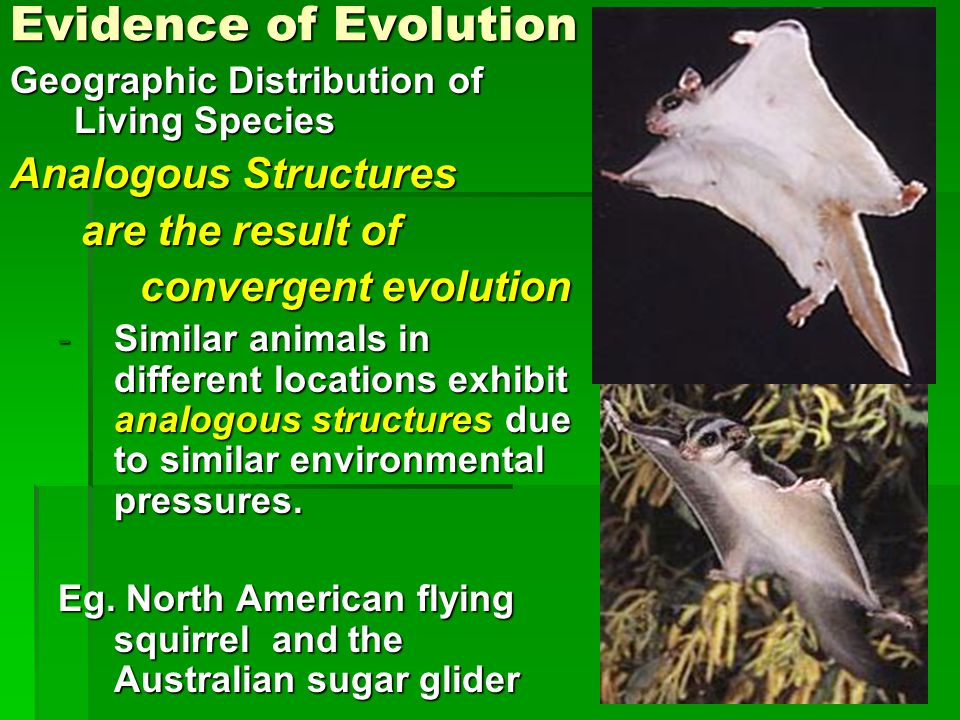 Evidence of Evolution Analogous Structures are the result of