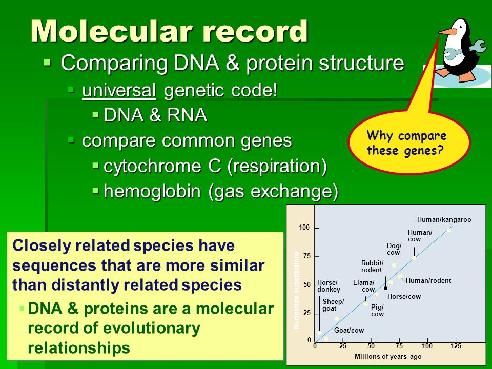 Molecular record Comparing DNA & protein structure