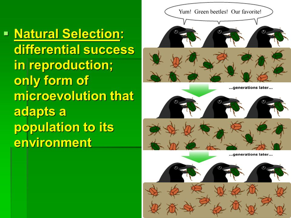 Natural Selection: differential success in reproduction; only form of microevolution that adapts a population to its environment