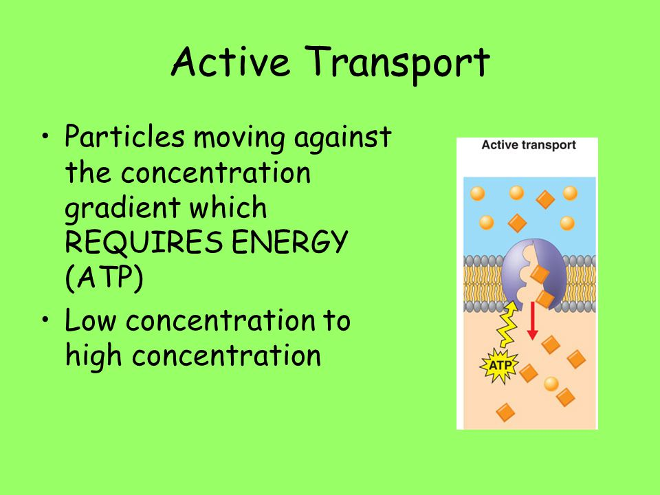 Active Transport Particles moving against the concentration gradient which REQUIRES ENERGY (ATP) Low concentration to high concentration.