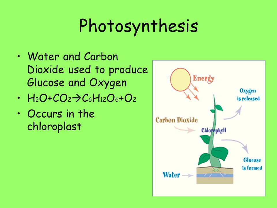 Photosynthesis Water and Carbon Dioxide used to produce Glucose and Oxygen.