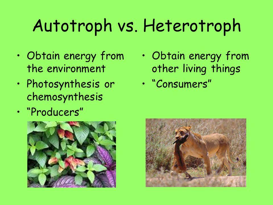 Autotroph vs. Heterotroph