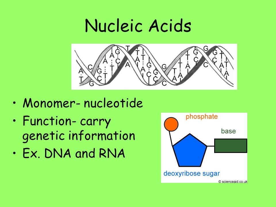 Nucleic Acids Monomer- nucleotide Function- carry genetic information