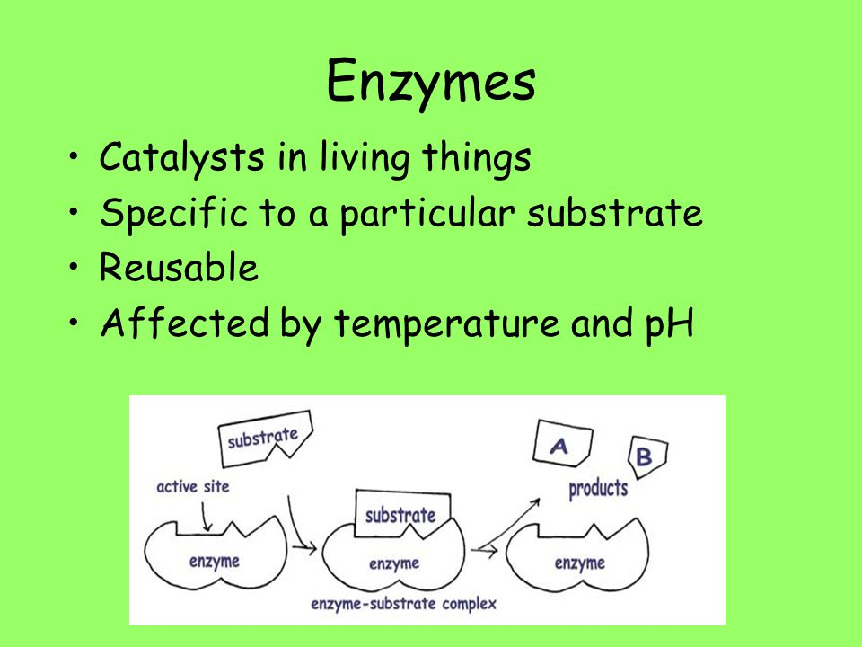 Enzymes Catalysts in living things Specific to a particular substrate