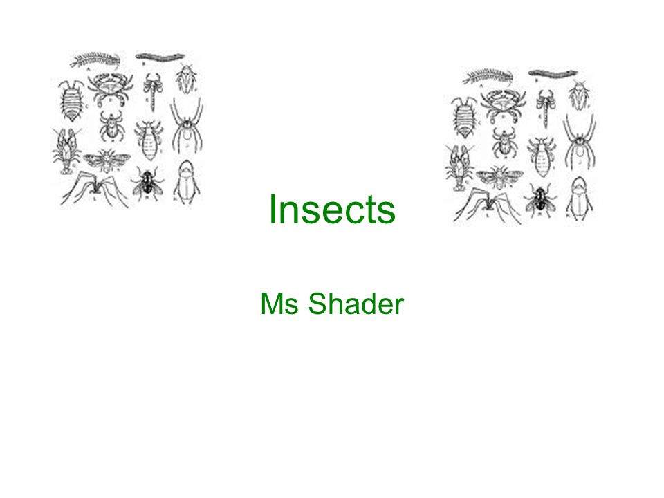 Insects Ms Shader