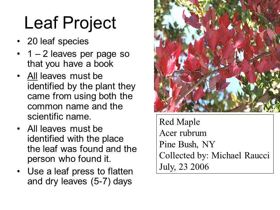 Leaf Project 20 leaf species