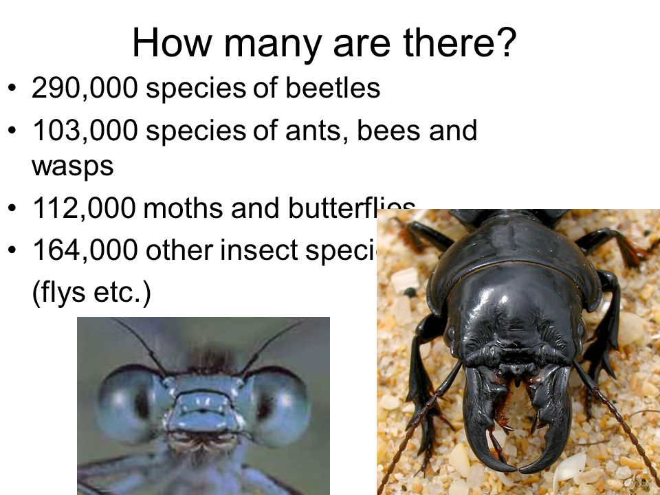 How many are there 290,000 species of beetles