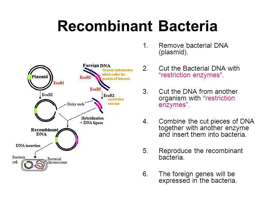 Recombinant Bacteria Remove bacterial DNA (plasmid).