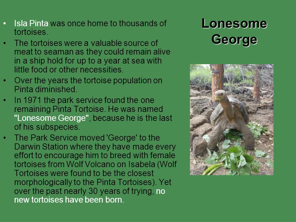 Lonesome George Isla Pinta was once home to thousands of tortoises.