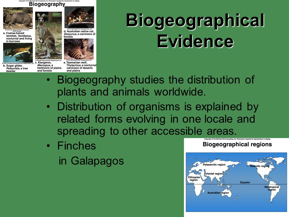 Biogeographical Evidence