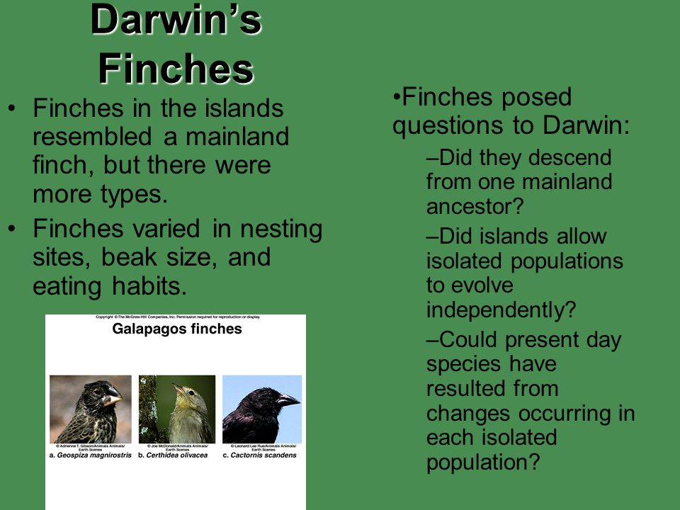 Darwin's Finches Finches posed questions to Darwin: