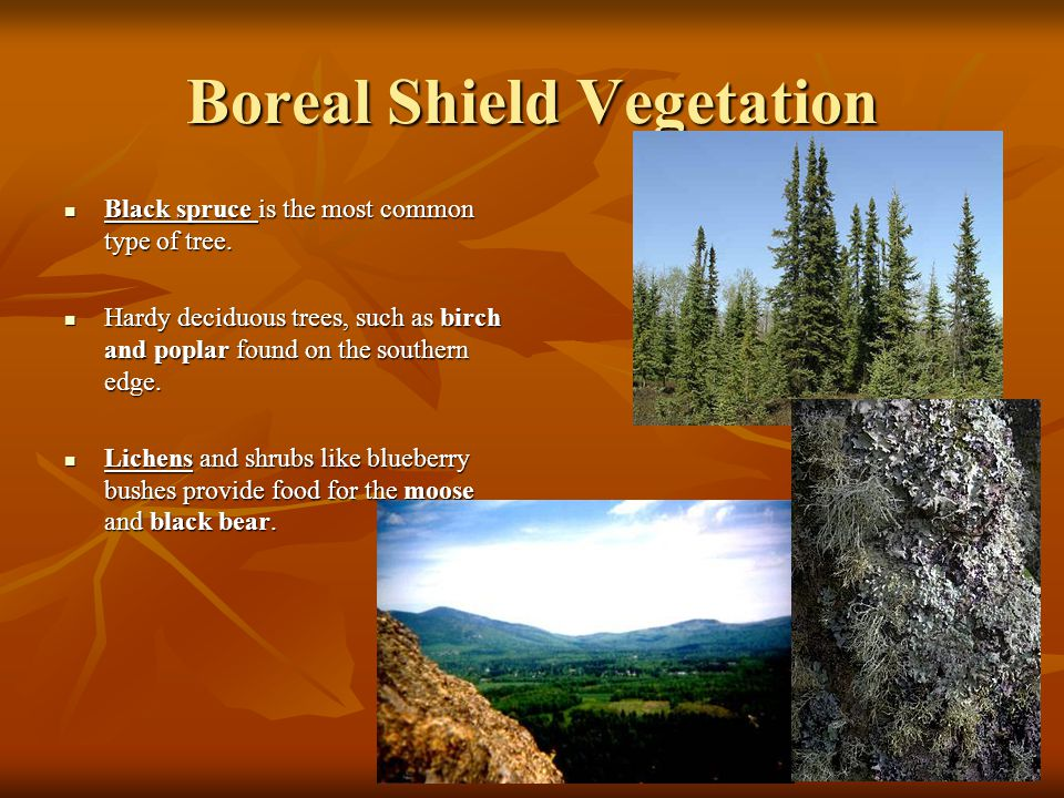 Boreal Shield Vegetation