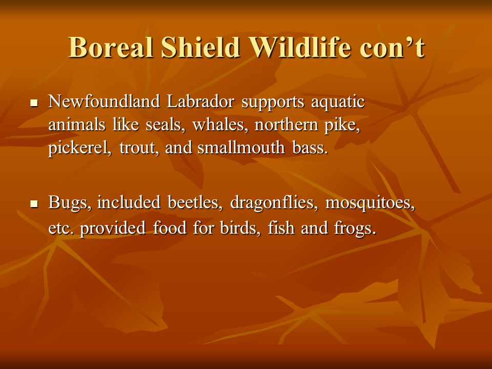 Boreal Shield Wildlife con't