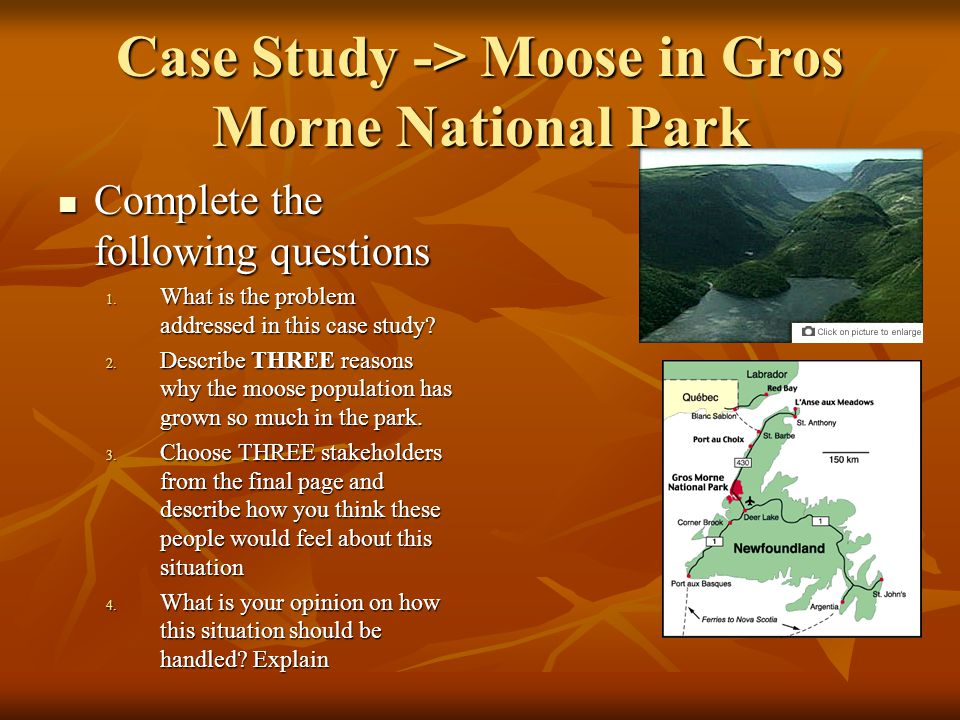 Case Study -> Moose in Gros Morne National Park