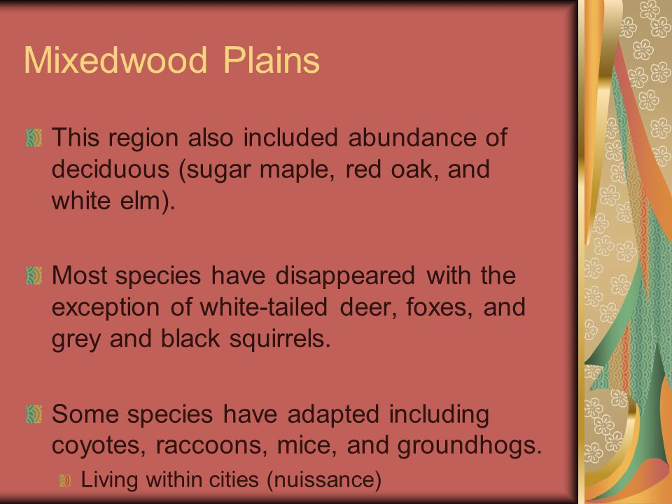 Mixedwood Plains This region also included abundance of deciduous (sugar maple, red oak, and white elm).