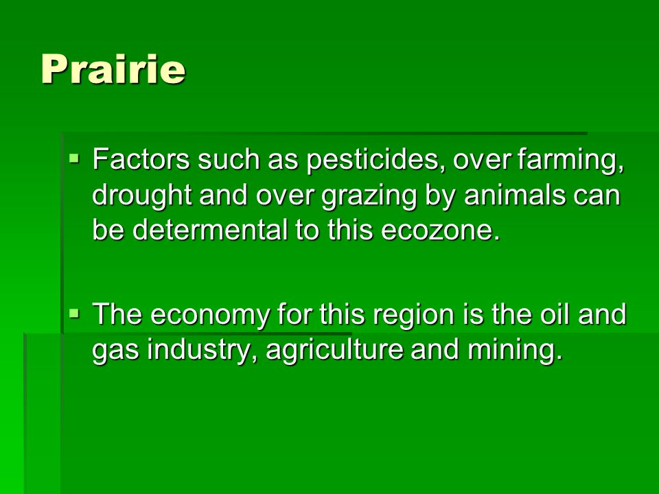 Prairie Factors such as pesticides, over farming, drought and over grazing by animals can be determental to this ecozone.