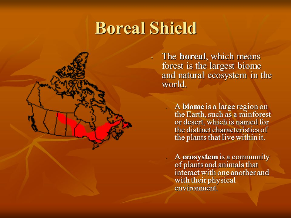 Boreal Shield The boreal, which means forest is the largest biome and natural ecosystem in the world.
