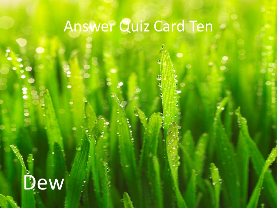 Answer Quiz Card Ten Dew