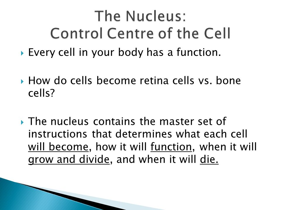 The Nucleus: Control Centre of the Cell
