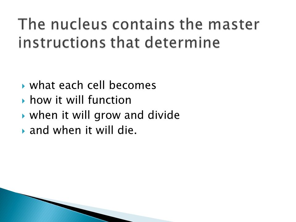 The nucleus contains the master instructions that determine