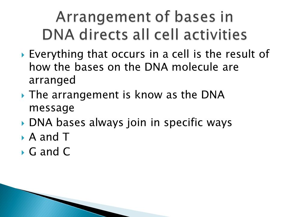 Arrangement of bases in DNA directs all cell activities