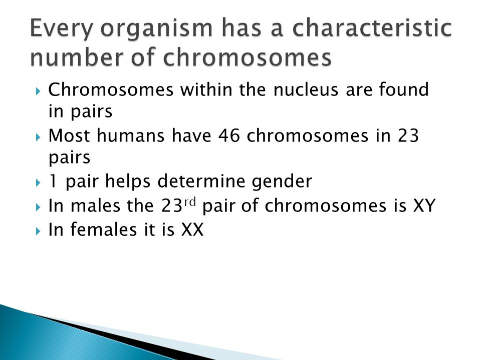 Every organism has a characteristic number of chromosomes