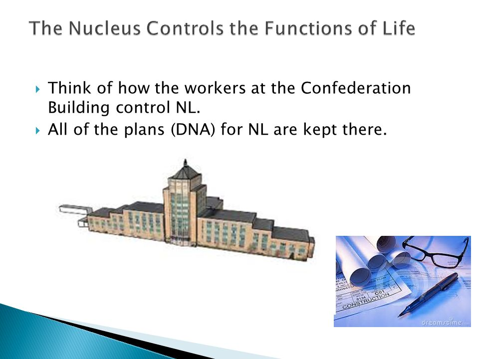 The Nucleus Controls the Functions of Life