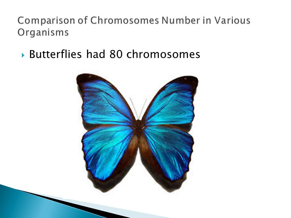 Comparison of Chromosomes Number in Various Organisms
