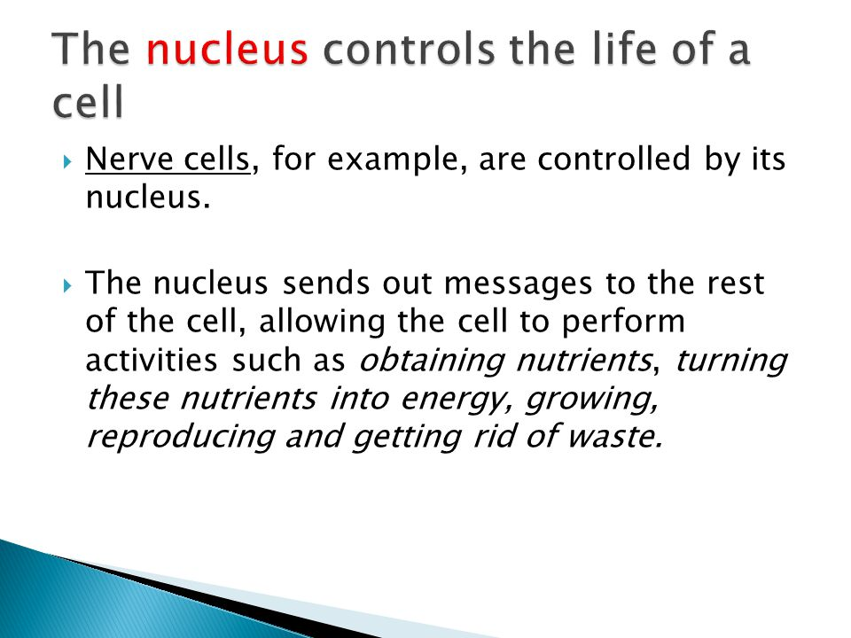 The nucleus controls the life of a cell
