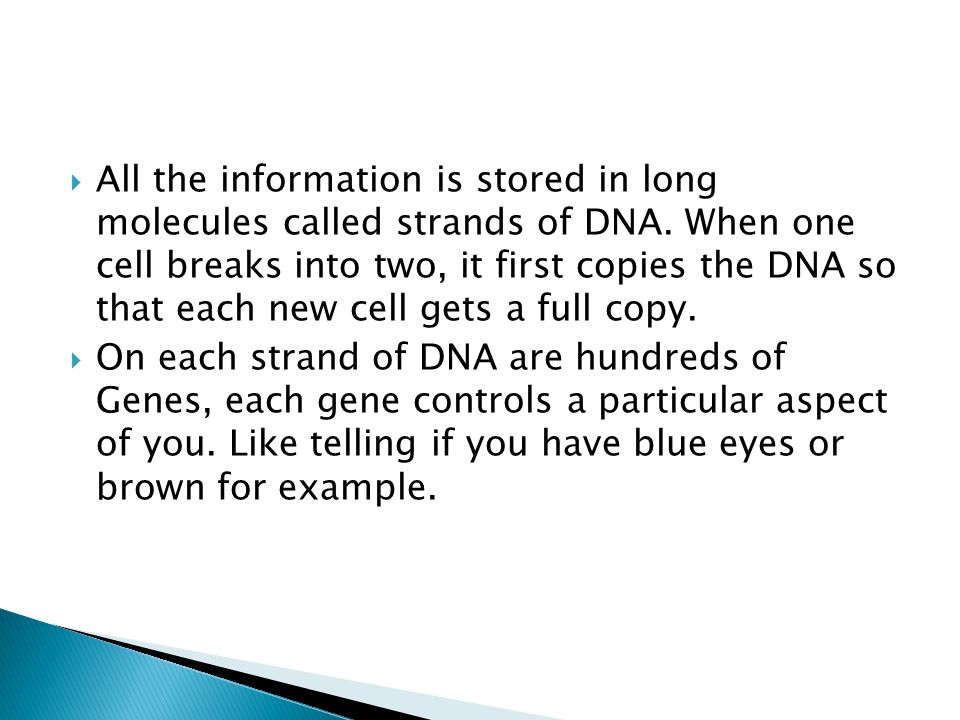 All the information is stored in long molecules called strands of DNA