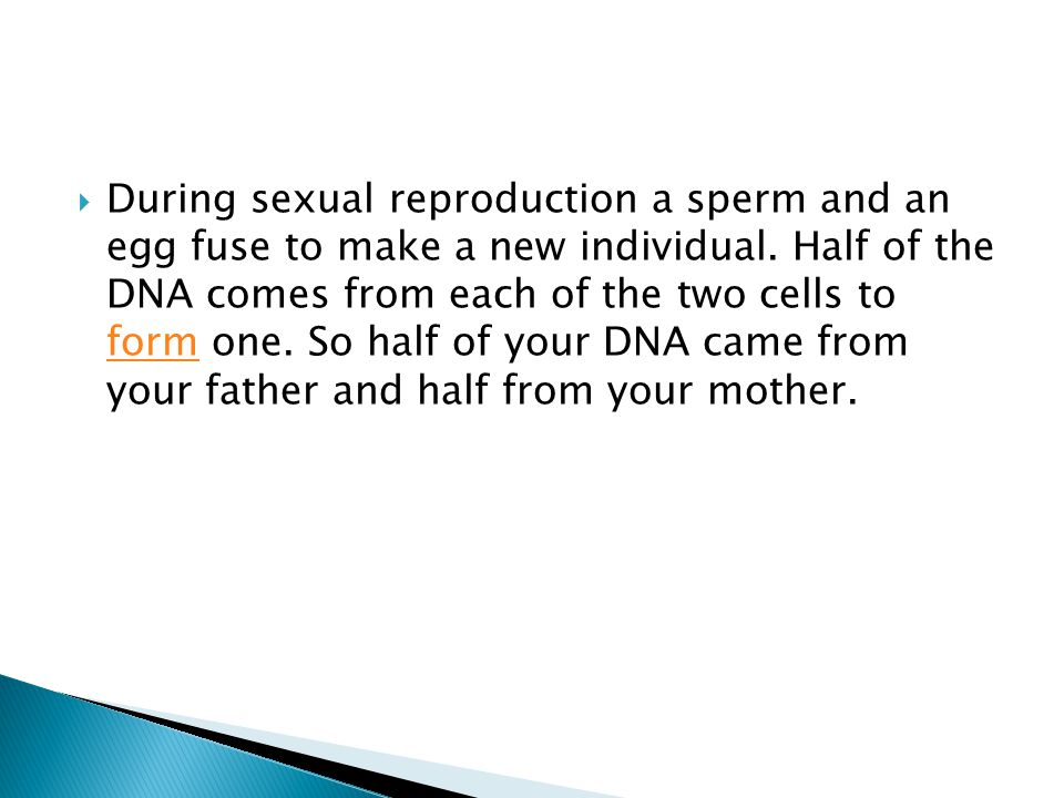 During sexual reproduction a sperm and an egg fuse to make a new individual.