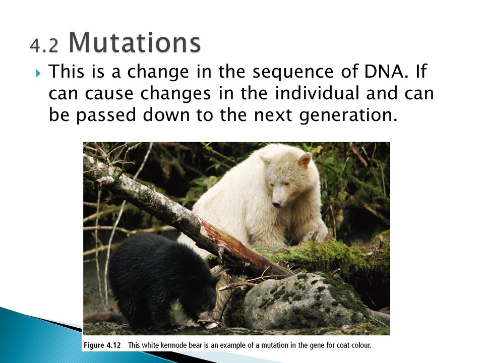 4.2 Mutations This is a change in the sequence of DNA.
