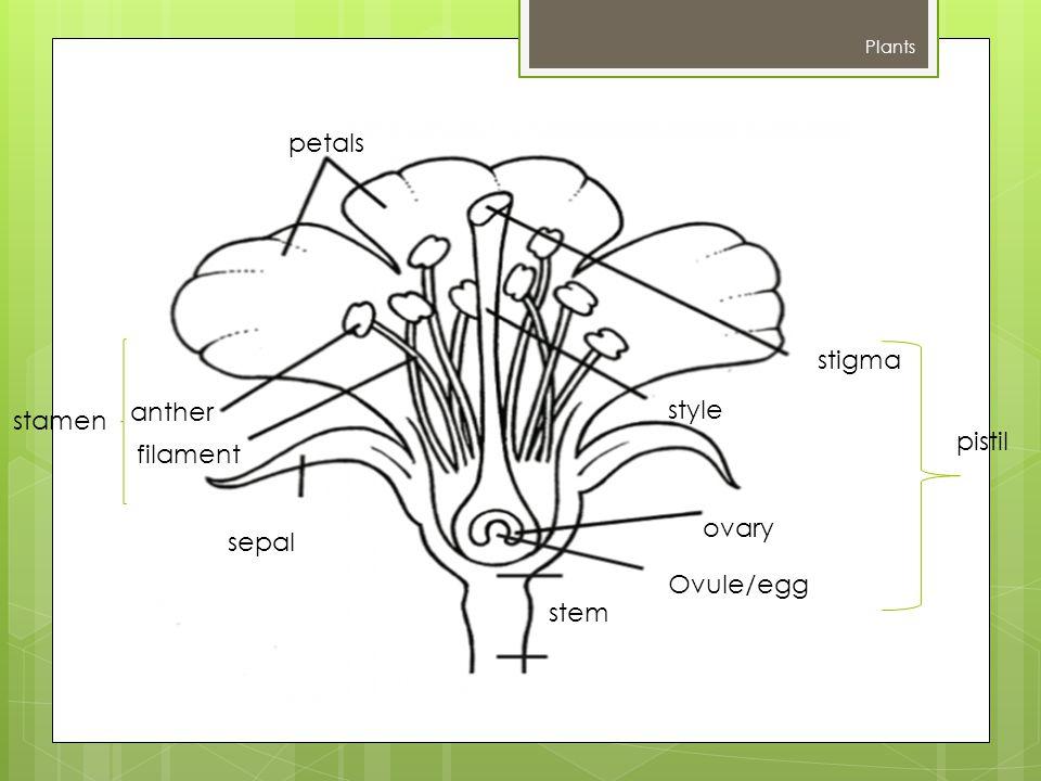 petals stigma anther style stamen pistil filament ovary sepal