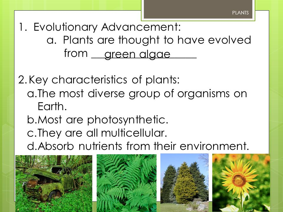 1. Evolutionary Advancement: a. Plants are thought to have evolved