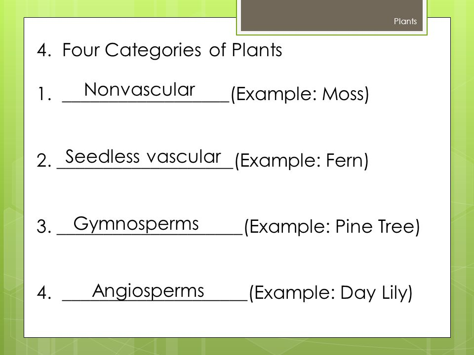 4. Four Categories of Plants 1. __________________(Example: Moss)