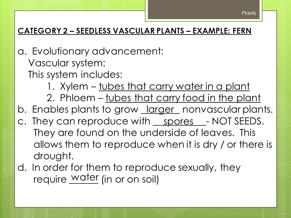 a. Evolutionary advancement: Vascular system: This system includes: