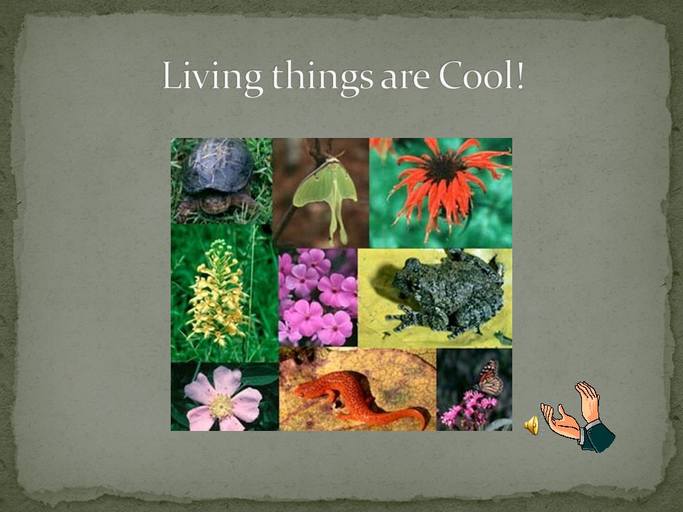 Living things are Cool!