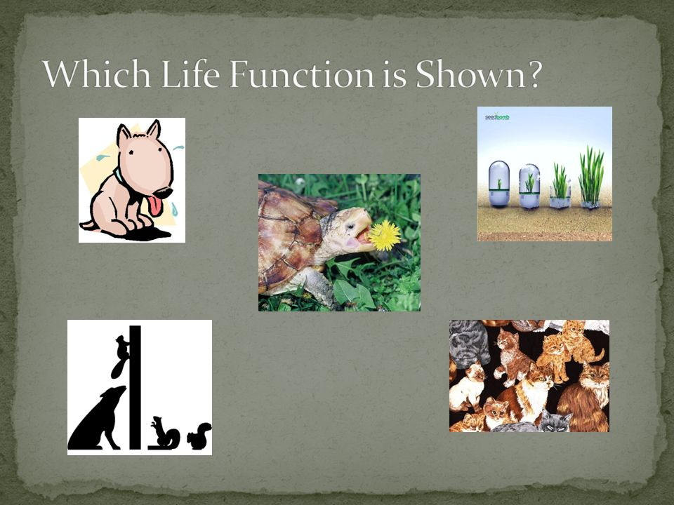 Which Life Function is Shown