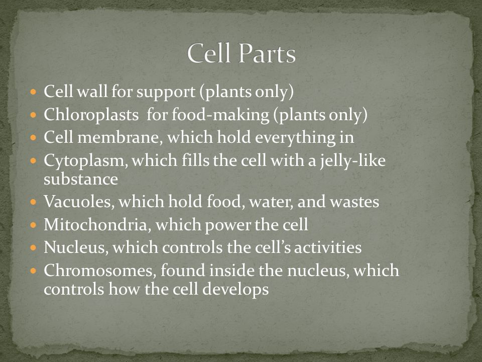 Cell Parts Cell wall for support (plants only)