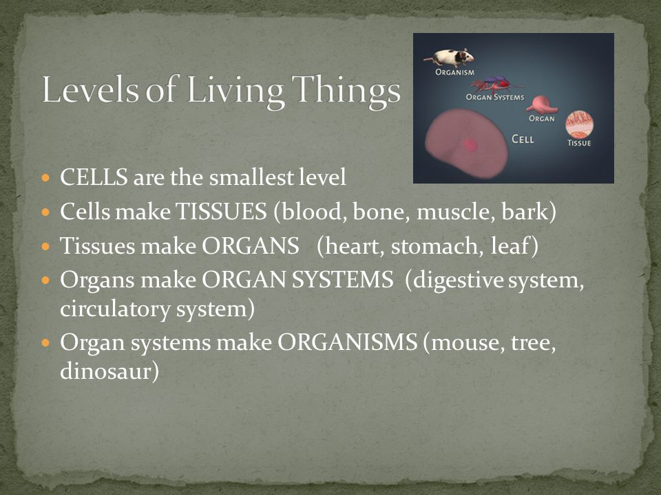 Levels of Living Things